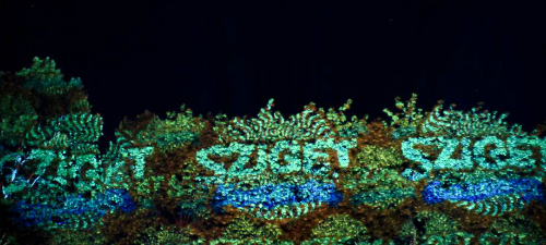 RECENZIE: Emir Kusturica, Seeed, Woodkid în a treia zi de Sziget Festival 2013 (POZE)